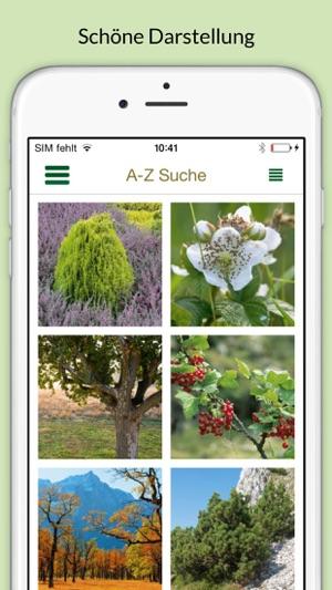 Atemberaubend Bäume & Sträucher bestimmen – entdecken Sie die Natur und erkennen &GI_01