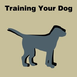 All about Training Your Dog