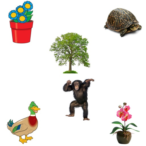Identify Plants and Animals