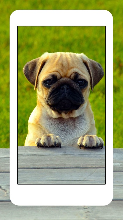 Dogs and Puppies - Dog Wallpapers, Cute Animal Backgrounds screenshot-3