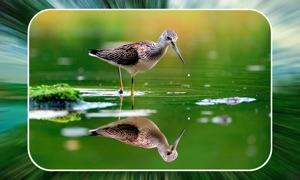 Birds Matching Puzzle