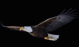 Real Live Eagle Cam