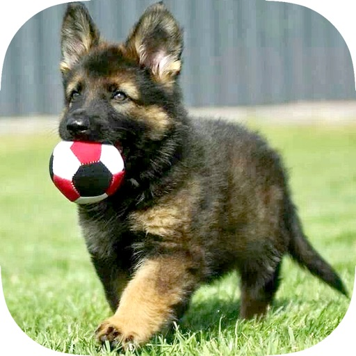 German Shepherd Puppy Training Made Easy - Best Guide & Tips For Beginners