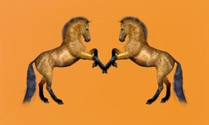 Horses Advisor