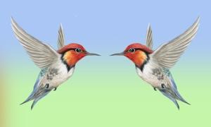 Birds Pairs