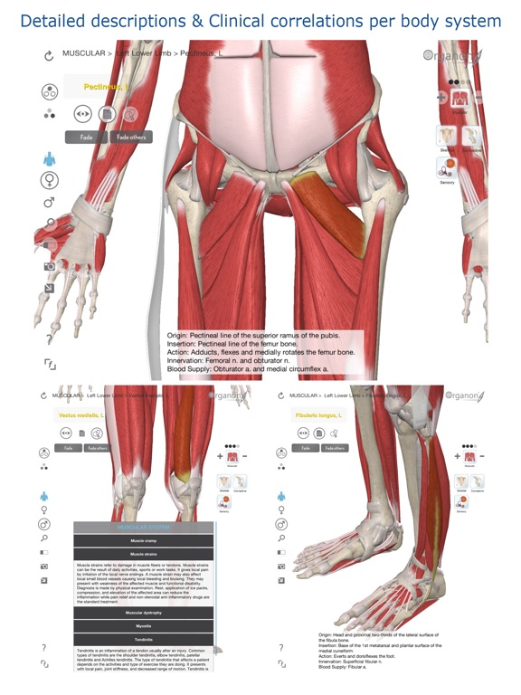 3d Organon Anatomy Muscles Skeleton And Ligaments App Price Drops