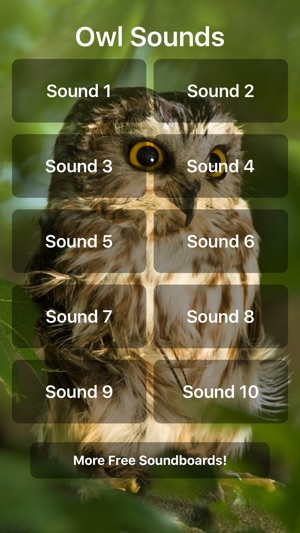 Owl Sounds on the App Store