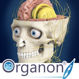 3D Organon Anatomy - Brain and Nervous System