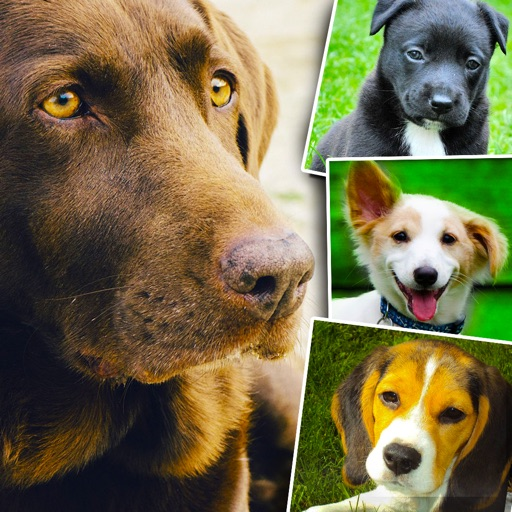 Dogs and Puppies - Dog Wallpapers, Cute Animal Backgrounds icon