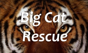 Big Cat Rescue for TV
