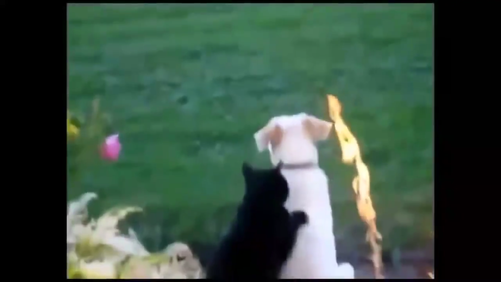 Infinite Cat Videos — Funny Internet Clips screenshot 2