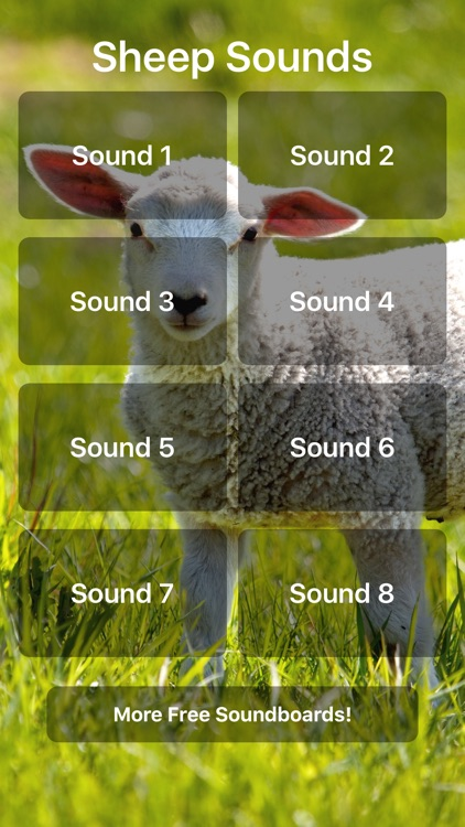Sheep Sounds