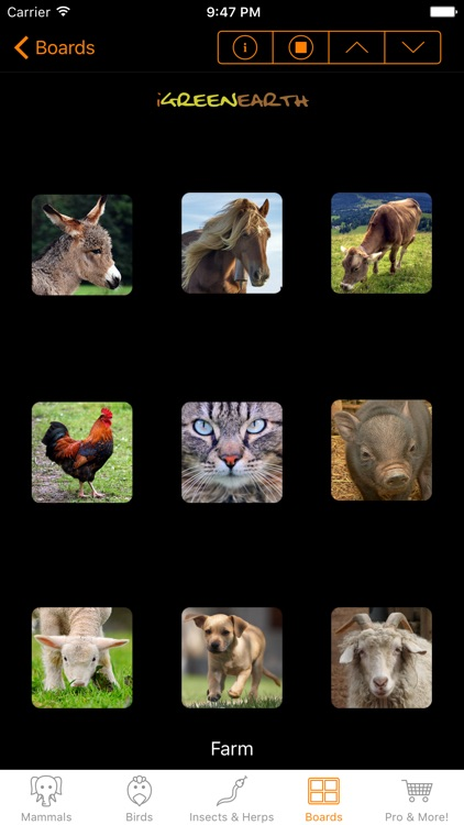 Animal Chatter Pro screenshot-4