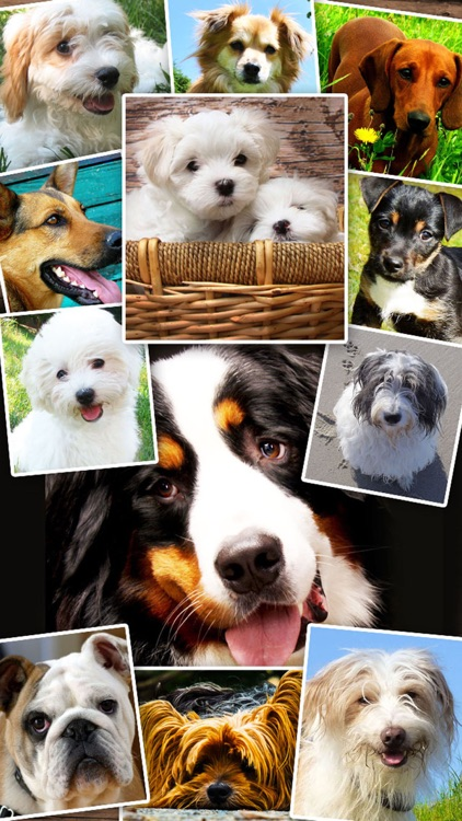 Dogs and Puppies - Dog Wallpapers, Cute Animal Backgrounds screenshot-0