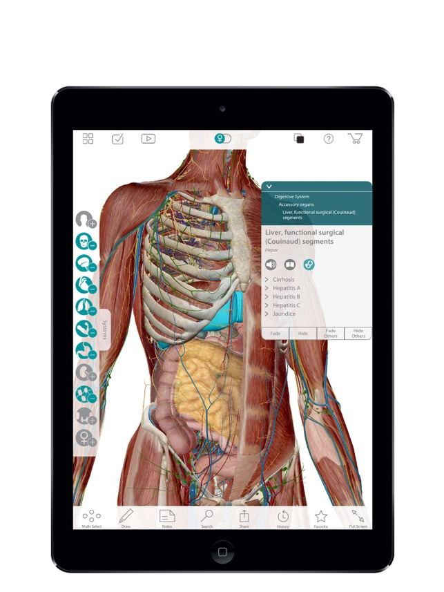 For Organizations 2016 Human Anatomy Atlas On The App Store