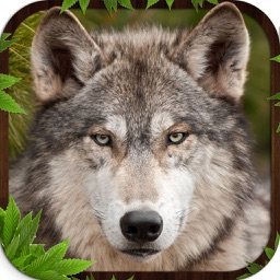 Wolf Simulator 3D Game