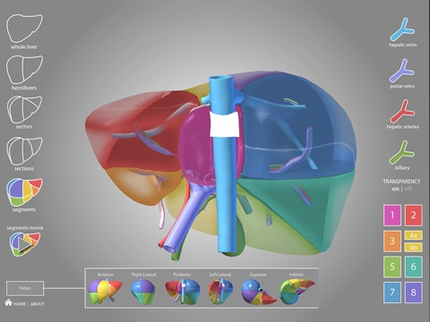 Surgical Anatomy of the Liver | App Price Drops