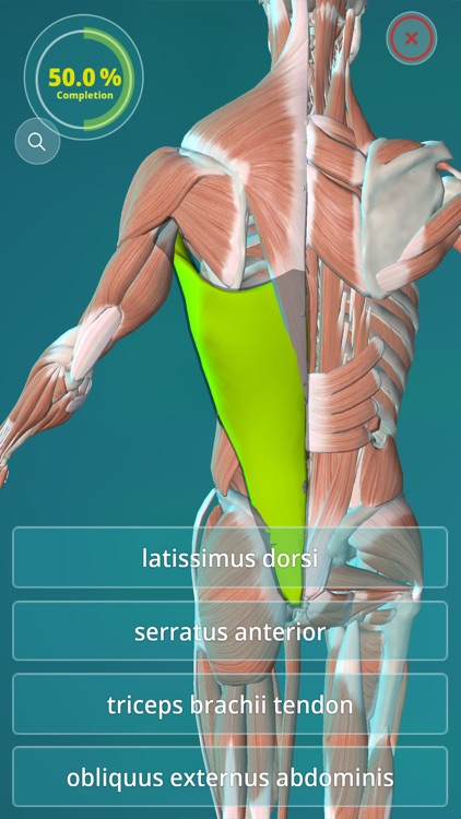 Anatomy Quiz - muscles and bones screenshot-2