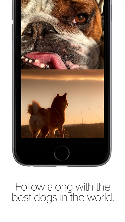 Pack Dog - Post your dog photos and meet dog owners by breed and city