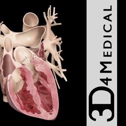 Heart Pro III