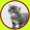 cats and games for kids - free game