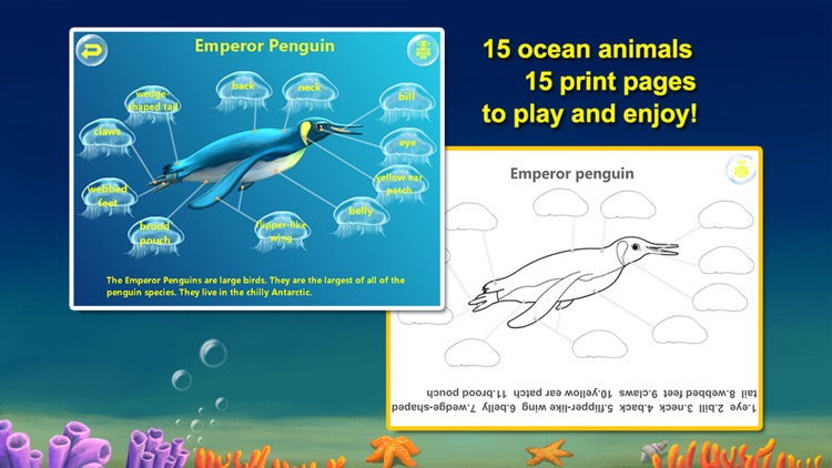 Amazing Ocean Animals- Educational Learning Apps for Kids
