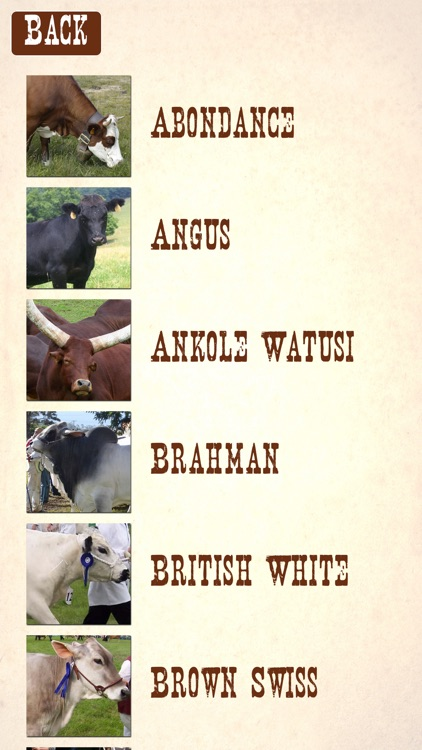 Cattle Breeds: Various Types of Cattle screenshot-1