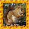 Squirrel Simulator 3D