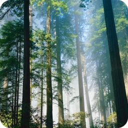 Relax Nature: Forest