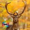 My Deer Simulator