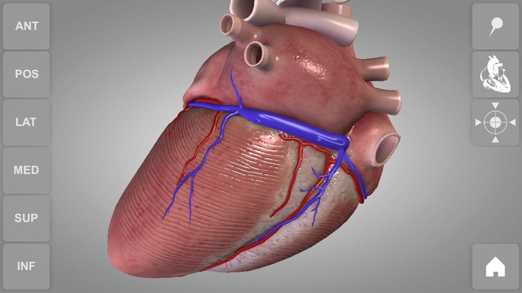 Heart - 3D Atlas of Anatomy Lite screenshot-1