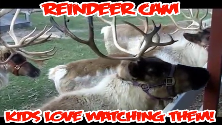 ReindeerCam - Watch Santa's Reindeer & More!