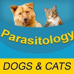 Parasitology Flash Cards