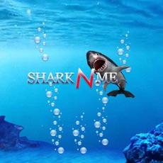 Activities of Shark N Me