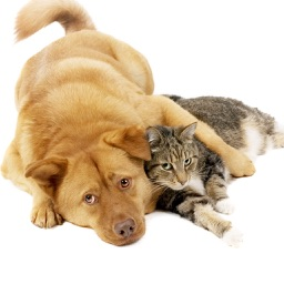 Cats & Dogs Hd Wallpapers and Backgrounds