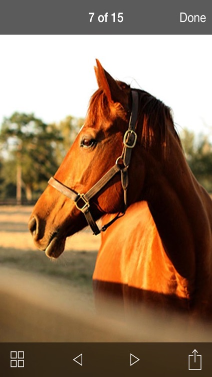99 Wallpaper.s - Beautiful Backgrounds and Pictures of Horse and Pony screenshot-3