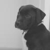 JoelPro - Puppy Calmer  artwork