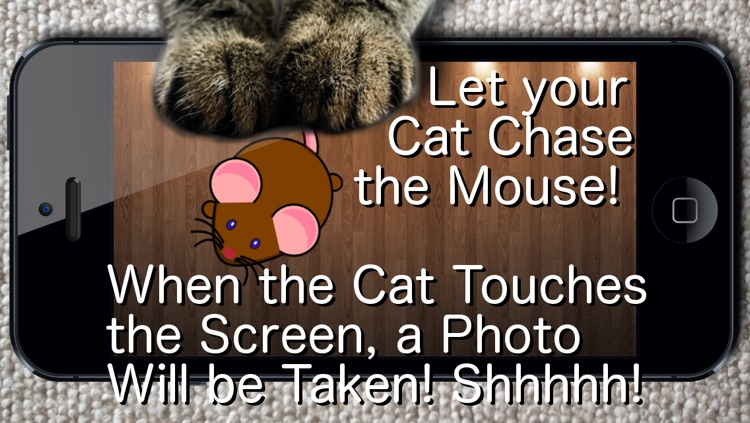 Say Cheese! Games for Cats
