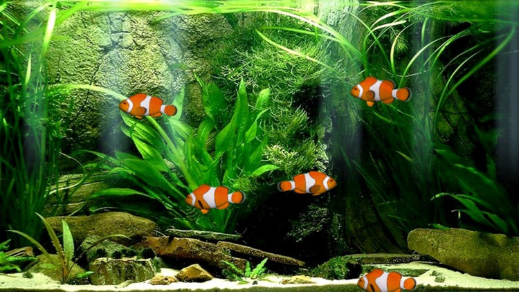 Aquarium Now