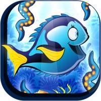 Codes for Fishy Fish Swim Star Escape A Splashy Jellyfish Training School Adventure Free Hack