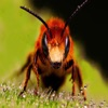 Insect Sounds ~ Insect Voices ~ Nature App