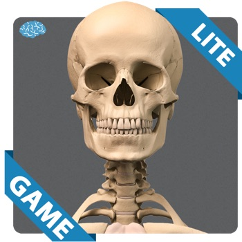 Skeletal Anatomy Game Lite