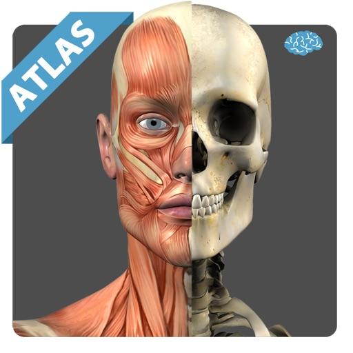 Anatomy Atlas Anatomicus