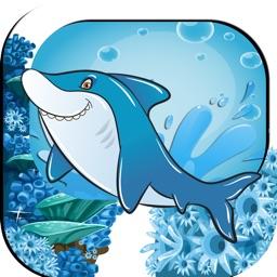 Dolphin Swim Safe Ocean Adventure