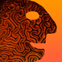Fast Memory Brain Training