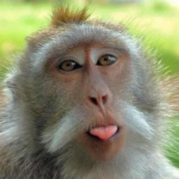 Monkey Jokes - Best, cool and funny jokes!