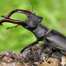 BugPedia