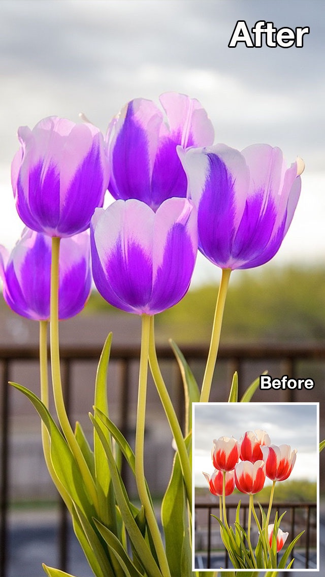 Screenshot #7 for Color Recolor Effects - Photo Splash FX and Paint Highlights into Black & White Pictures