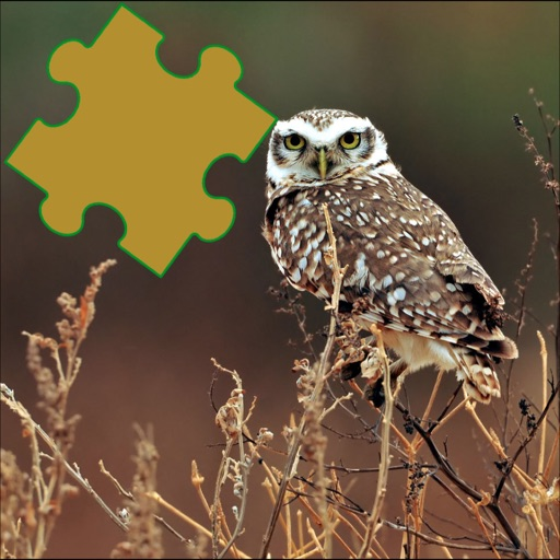 Owls Great Puzzle