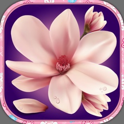 Flower Wallpaper – Pretty Screen Lock.er And Floral Background Picture.s